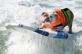 Surf Chomper