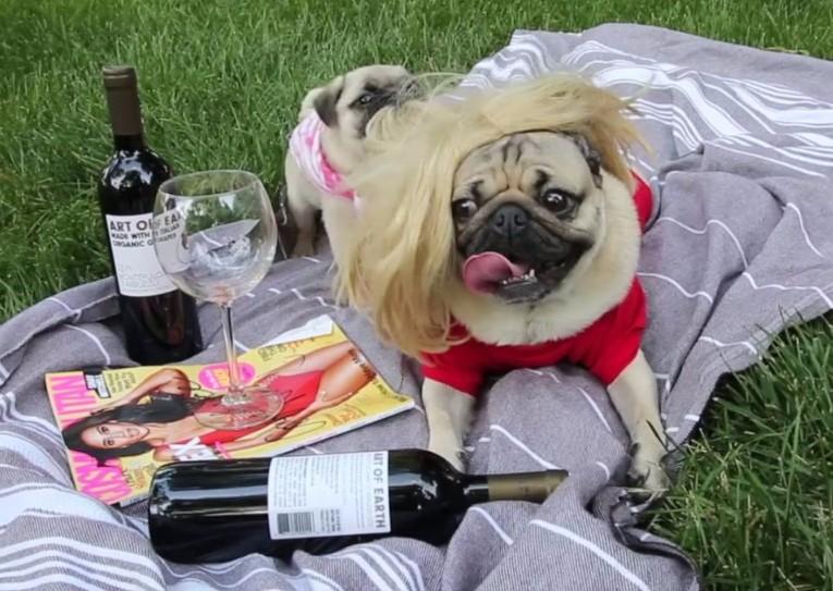 Wine Puggo