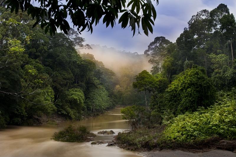 Danum Valley. © Wildlife Worldwide