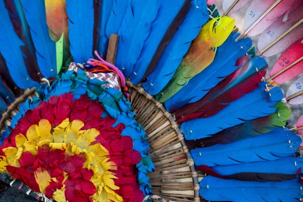 Blue-throated Macaws.  © Fabian Meijer