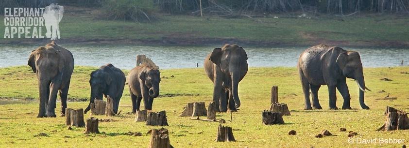 Elephants. © David Bebber