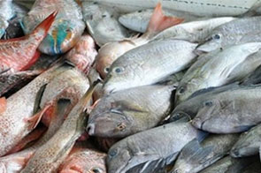 Study finds fish stocks in Caribbean declining fast