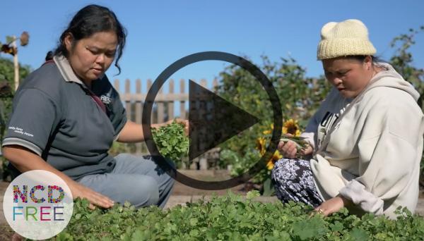 NCD Free Sowing Seeds Video