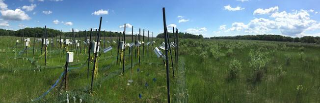 SERC Global Change Research Wetland