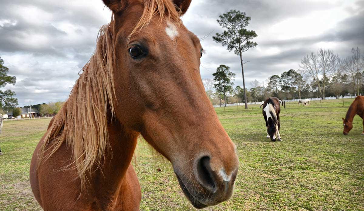 A beautiful friendly horse!