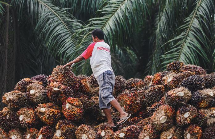 Indonesia palm