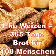 1 Hektar Weizen = 1 Jahr Brot für 100 Menschen