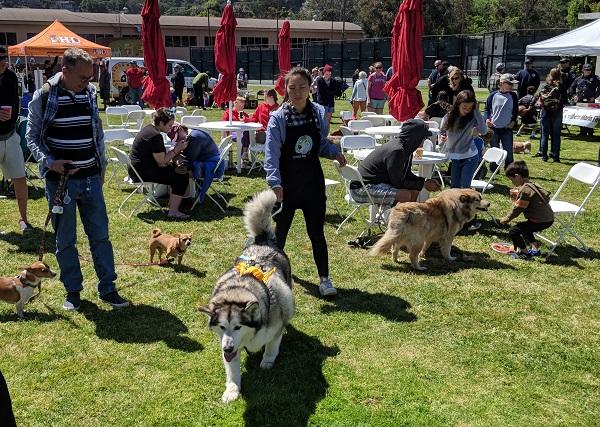 Sausalito WAG Dog Festival
