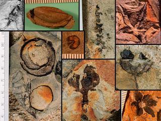 Castle Rock Fossils