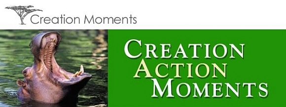 Creation Action Moments