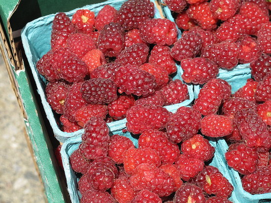 Tayberries from Yerena Farms (source Yumsugar.com)