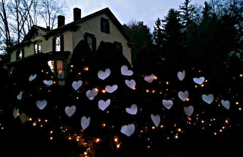 Fir trees with hearts in the Berkshires
