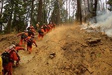 Furguso Fire - Yosemite National Park