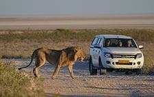 Etosha NP Namibia