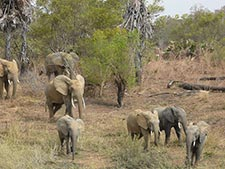 Elephants in Pendjari National Park, Benin