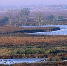 Horizon Marsh