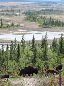 Wood Buffalo NP