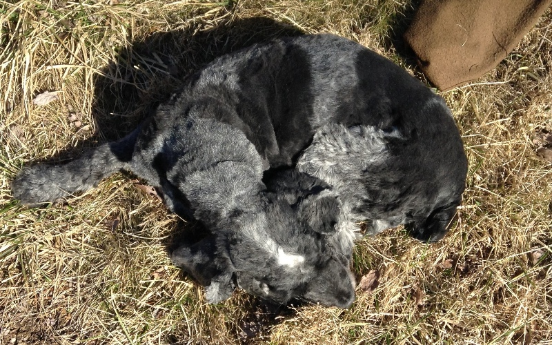 Sam sleeping in the sun