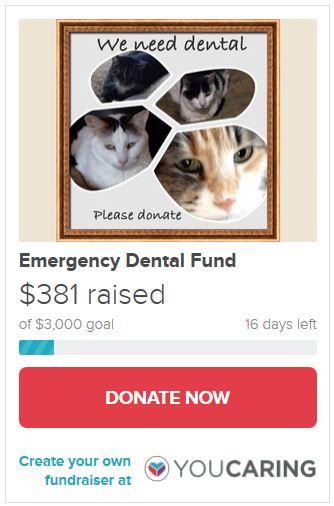 Emergency Dental Fund