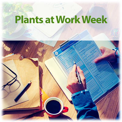 Link to blog - National Plants at Work Week: Biophilic Design in the Modern World