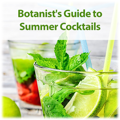 Link to blog - The Botanist's Guide to Summer Cocktails