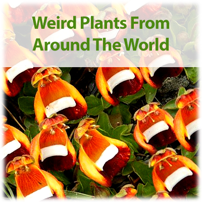 Link to Blog - 5 Weird Plants From Around The World