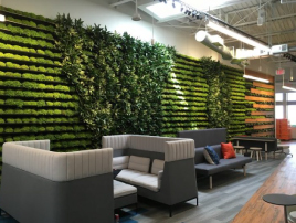 Enriching The Workplace With Biophilic Design