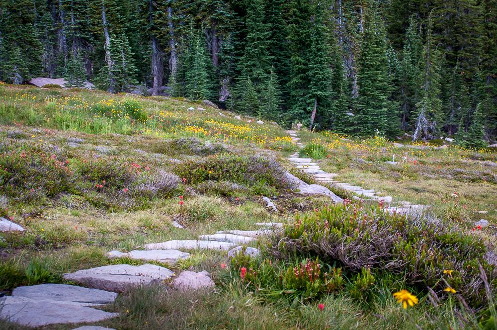 Path thru Panther Meadows