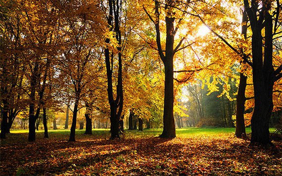 The sun shines through several trees with yellow and orange leaves.
