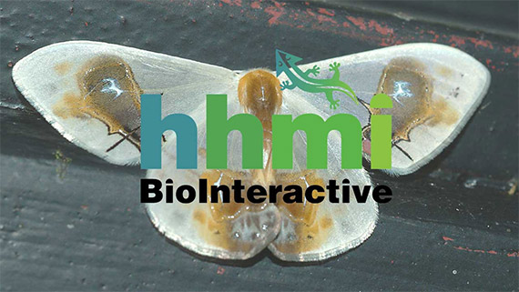 HHMI BioInteractive