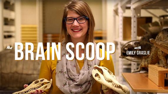 The Brain Scoop