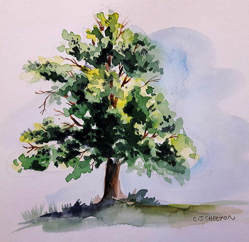 Tree Portrait by CJ Shelton