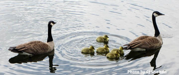 Goos Family Swimming