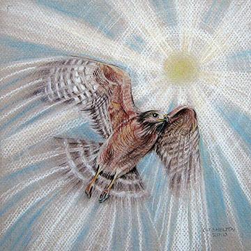 """""""Hawkwind"""" by CJ Shelton"""