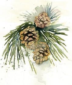 Pine Cone in Watercolour