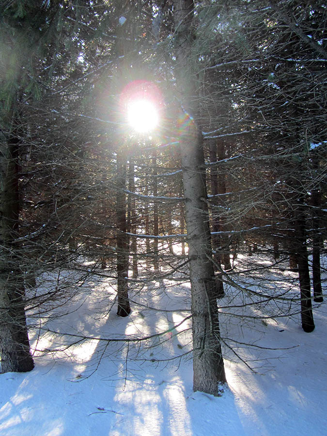 Sun through the winter trees