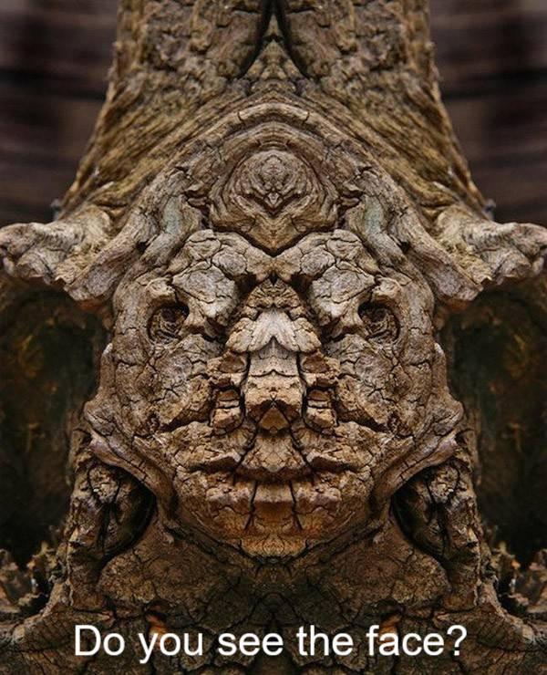 Face in a Tree - Pareidolia