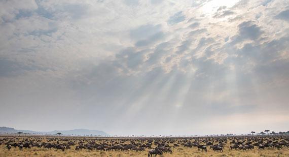Sun rays over the Mara