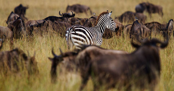 Friends of the Mara