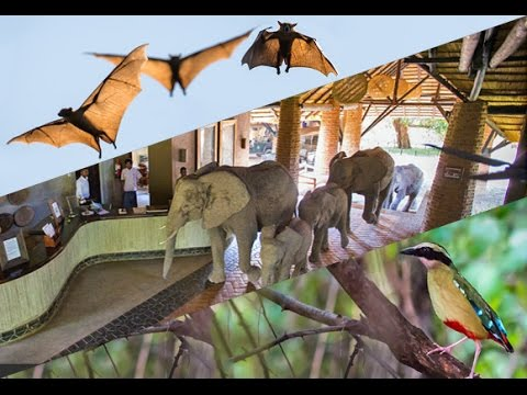 Elephants, Pittas & Bats VIDEO