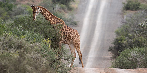 Kwandwe Private Game Reserve access