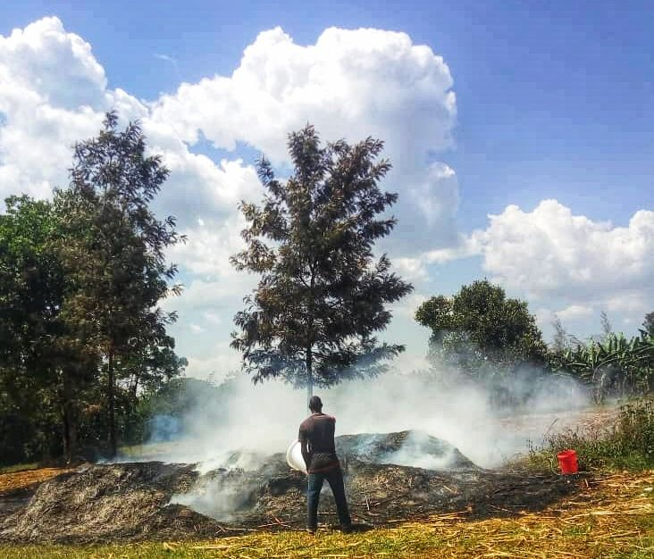 Burning sugarcane mulch