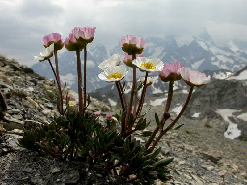 Image fleurs montagne