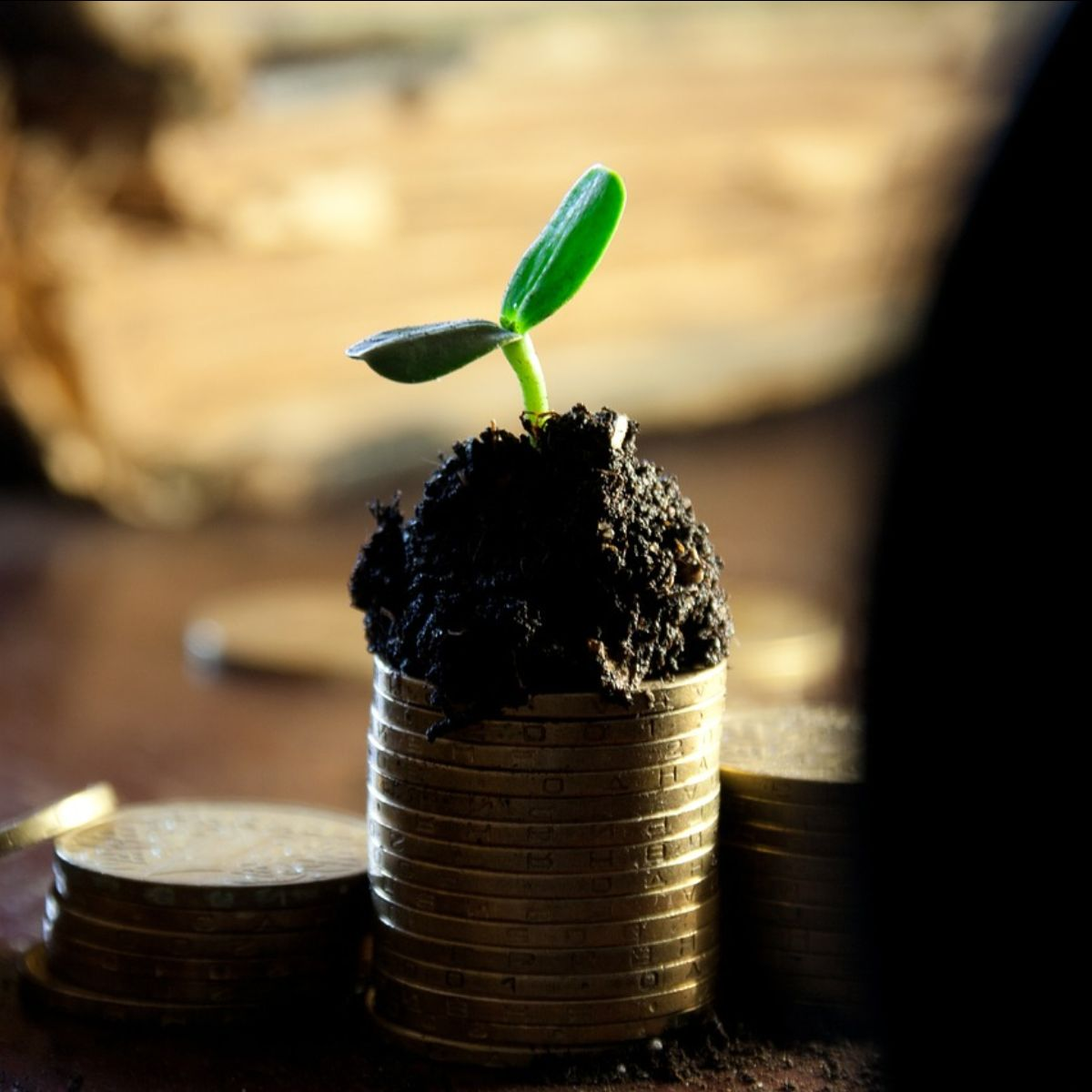 How fast can your business afford to grow organically