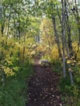 Fall trees and Heidi
