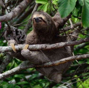Animals in the rainforest trees
