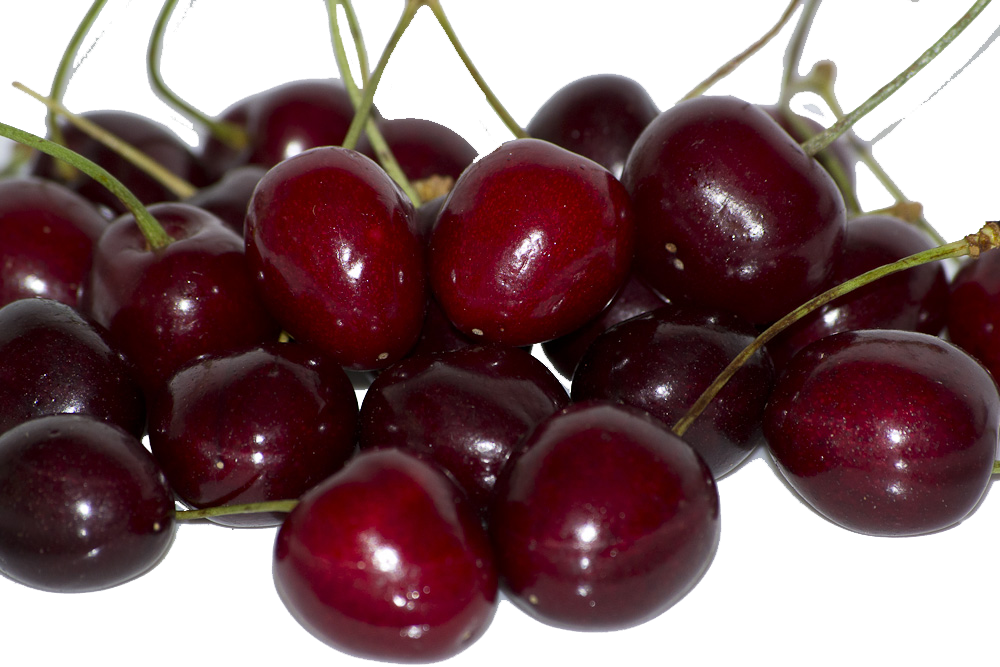 What can cherries teach you about standard operating procedures?