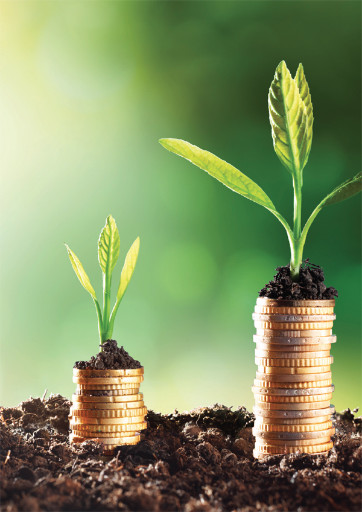 green plants growing on small stacks of coins
