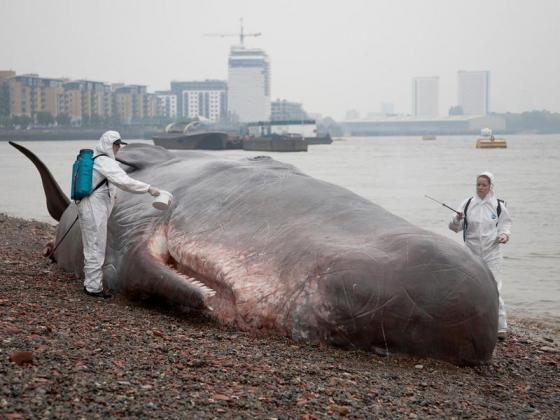 The Great Greenwich Whale. Image by Stu Mayhew