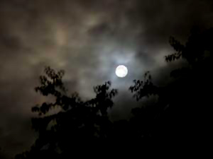 Full Moon Over Roxbury Road by Jane Sherry